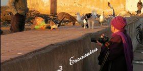 Un'antropologa ad Essaouira. Mostra fotografica