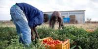 Passpartù on air: Nuovi dati sui vecchi schiavismi nelle campagne d'Italia