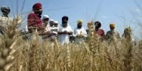 Braccianti nell'Agro Pontino: a processo gli sfruttatori