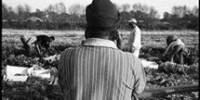 Doparsi per lavorare come schiavi: indagine di In Migrazione