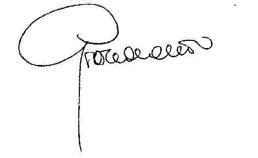 firma-grazia