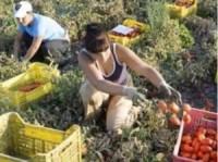 lavoratori-agricoli-300x224