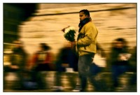 venditore di rose
